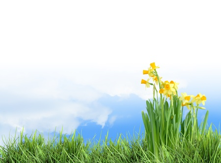 Ecology concept. Nature background with grass and flowers against blue sky Stock Photo - 13158966