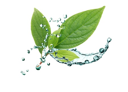 Ecology concept. Green leaves with splashing water on white background
