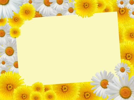 Blank sheet of paper for text on nice yellow background with dandelions and daisy flowers Stock Photo - 13321936