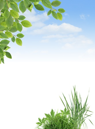 Ecology concept. Border made from green grass and leaves against blue sky.Nice background with blank space for text