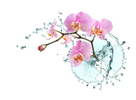 Ecology concept. Beautiful pink orchid with splashing water on white background Standard-Bild