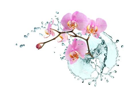 Ökologie-Konzept. Schöne rosa Orchidee mit Spritzwasser auf weißem Hintergrund