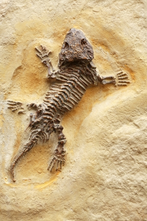 Ancient lizard fossil on yellow stone background
