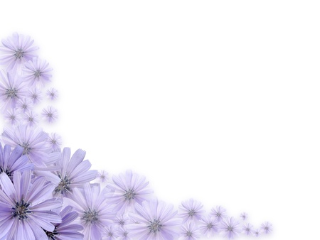 Nice border made from beautiful violet daisy flowers photo