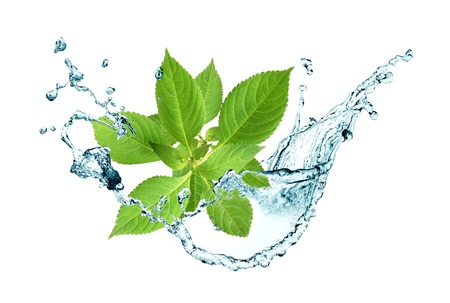Ecology concept.Abstract composition with green leaves and splashing water Stock Photo