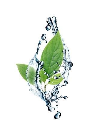 生態学の概念。緑の葉と水しぶきで抽象的な構成 写真素材
