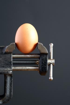 pressured: Pressure concept. Hens egg pressured in a bench vice on dark background