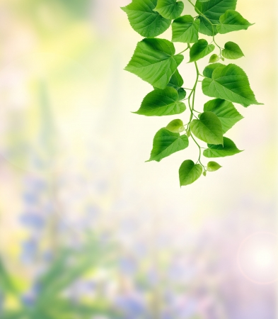 Nice freshness green leaves twig on summer nature background photo