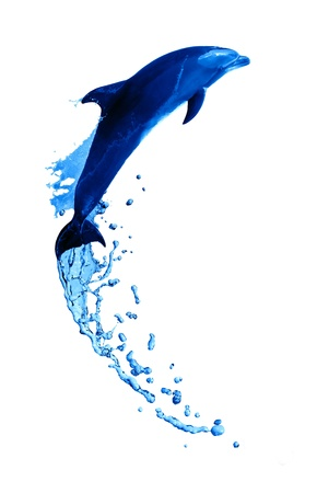 dolphin jumping: Nice trained dolphin make high jump from water on white background