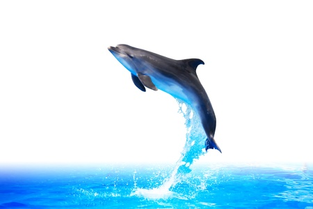 Nice trained dolphin make high jump from water on white background. Clipping path is included