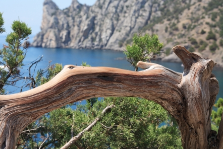 promontory: Nice old curved tree on background with promontory and lagoon