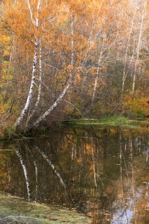 reverberation: Nice view of autumn forest near river with reverberation. Good background