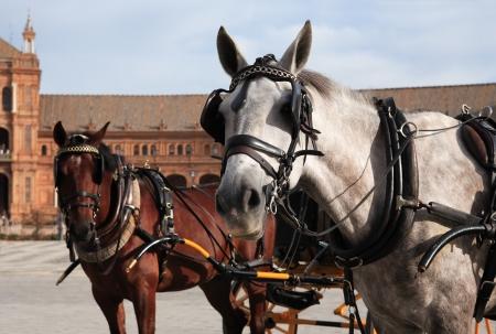 blinders: Pair horses with coach against ancient palace on Plaza de Espana, Seville, Spain Stock Photo