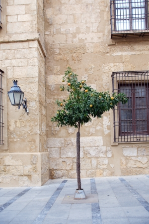 naranja arbol: Naranjo silvestre en la calle en la antigua ciudad mediterr�nea. C�rdoba, Espa�a Foto de archivo