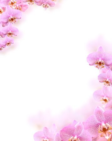 아름 다운 분홍색 난초 꽃에서 테두리