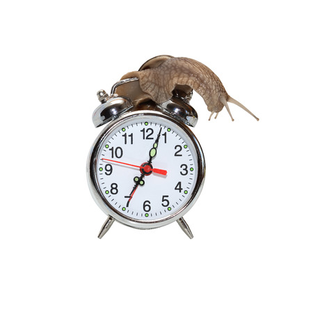 slack: Time concept. Snail on the alarm clock. Isolated on white with clipping path