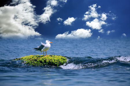away from it all: Freedom concept. Alone gull sitting on stone near wave between sky and sea