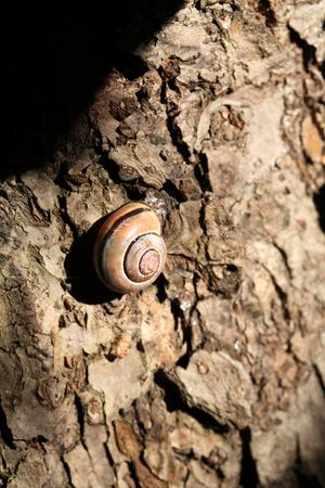 slack: Ordinary snail on wooden background under sunbeam