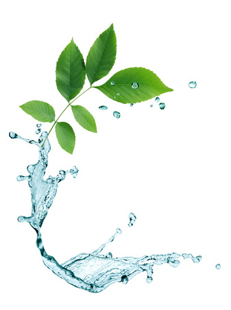 water plants: Ecology concept. Abstract composition with green leaves and water drops Stock Photo