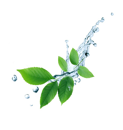 Ecology symbol. Nice twig with green leaves and water drops on white background