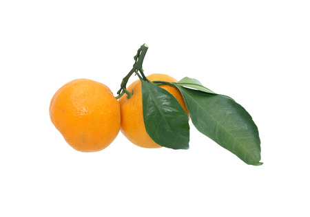 frescura: Un par de mandarinas frescura en el fondo blanco Foto de archivo