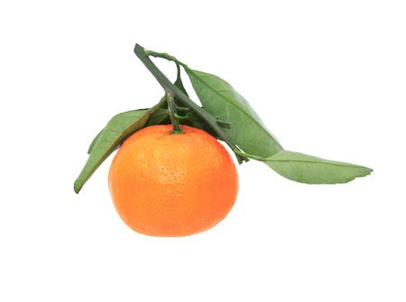 frescura: Una mandarina frescura en el fondo blanco.