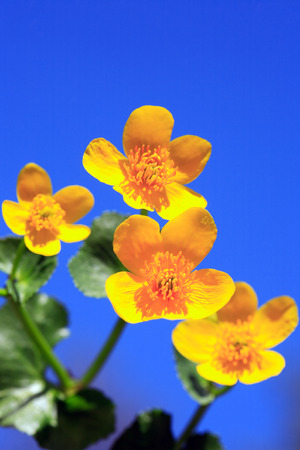 nosegay: Closeup of nice yellow wildflower against blue sky Stock Photo