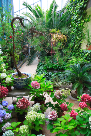 winter garden: Various tropical plants and flowers inside big winter garden