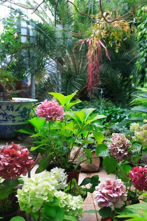 Verschiedene tropische Pflanzen und Blumen in großen Wintergarten