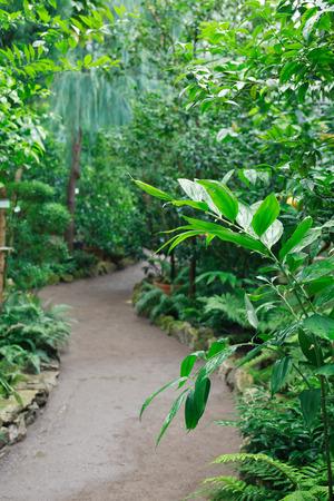 Verschiedene tropische Pflanzen und Bäume in großen Wintergarten