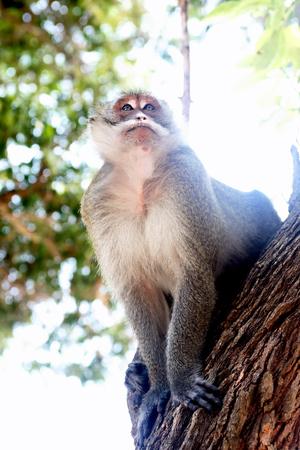 Closeup portrait of wild monkey sitting on tree