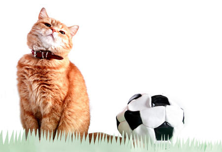Ginger domestic cat near blown out the ball against white background