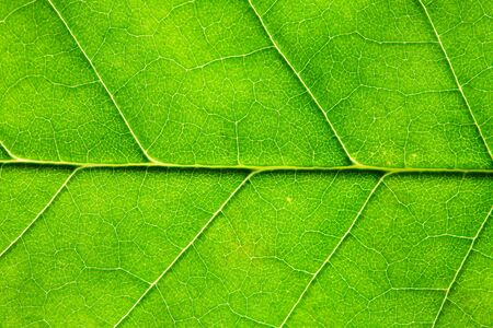 Nice background. Extreme closeup of freshness green leaf