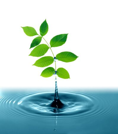 Freshness green leaves with water splash on white background