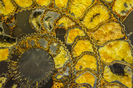 Gemstone ammonite in the form of a spiral, color yellow with gold. Expensive jewelry. Background or texture