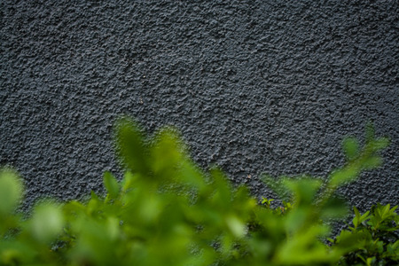 Gray monophonic background or texture with roughness. Blue shade. Plaster on a wall. Bright green leaves of bushes