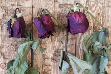 withering: Beautiful vintage wilted roses on a rustic background. Faded wedding flowers.