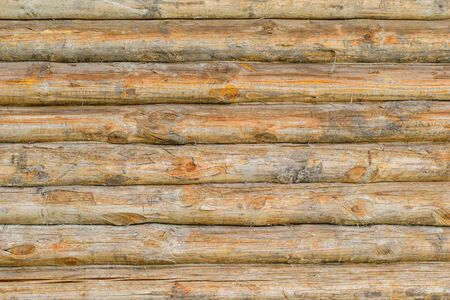 Background wall of a large number of whole trees. The texture of the wood.
