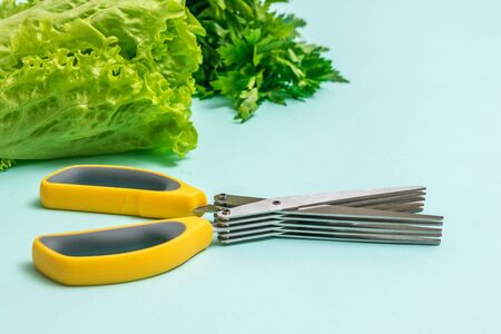 Kitchen scissors with multiple blades and a large amount of greenery on a light background. A device for slicing lettuce. Фото со стока