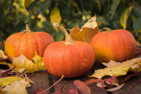 Three ripe pumpkins with autumn leaves on a wooden table. Autumn pumpkin harvest.
