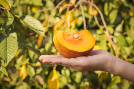 Hand holding a piece of pumpkin on the background of tree leaves. Autumn pumpkin harvest.