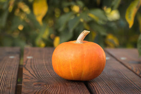 One ripe pumpkin on a wooden table against the background of tree leaves. Autumn pumpkin harvest. 写真素材