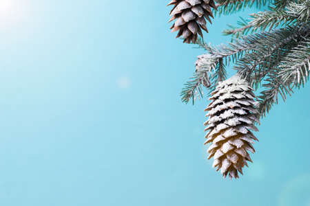 The rays of the bright sun fall on a spruce branch with large cones. New year mood.