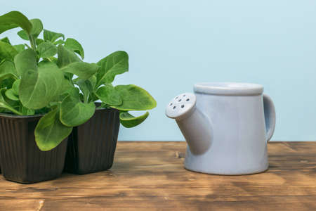 Watering can with flower seedlings in a plastic container on a wooden table. Growing plants at home. Stock fotó