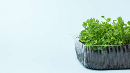 Shoots of young plants for seedlings in a plastic container on a light background. Growing plants at home.