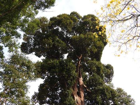 Royal Botanic garden in Kandy, Sri Lanka, green flora on a clear Sunny day Imagens