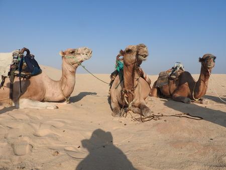 la femme au turban, le visage est fermé, avec un chameau dans le désert du Sahara