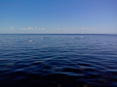 Beluga whale near Cape Beluzhiy, Solovetsky Islands, Arkhangelsk Region, Russia Zdjęcie Seryjne