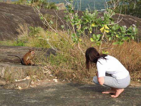 Mujer, vista posterior, rostro no visible, mirando mono salvaje en la naturaleza, Dambulla, Sri Lanka Foto de archivo