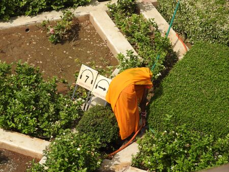 The gardens in the courtyard of amber Fort, woman running, seen from behind, Jaipur, Rajasthan, India.